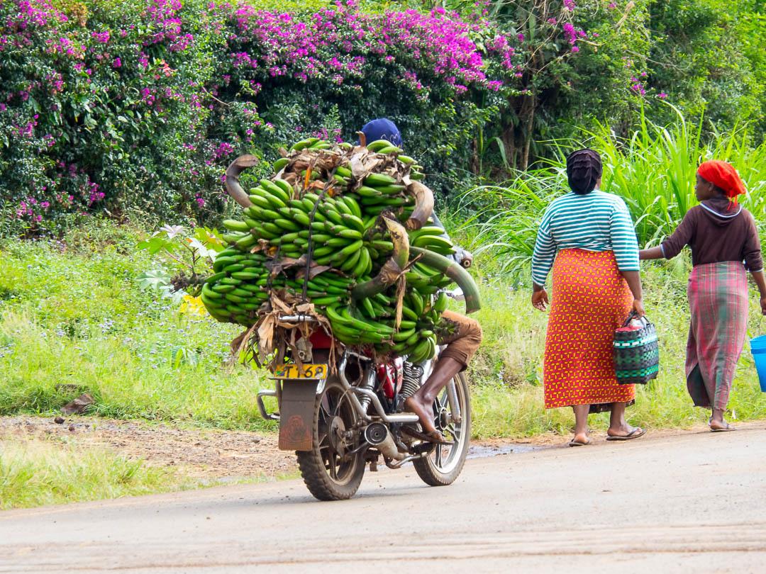 Motorcycle rider bringing bananas to a banana market