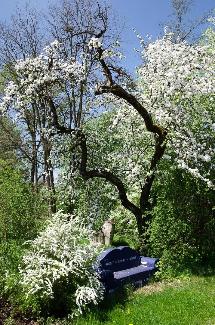 Kirschblüte bei Oberhembach