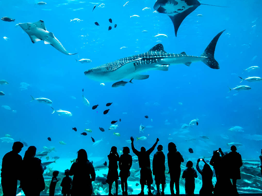 Georgia Aquarium Atlanta