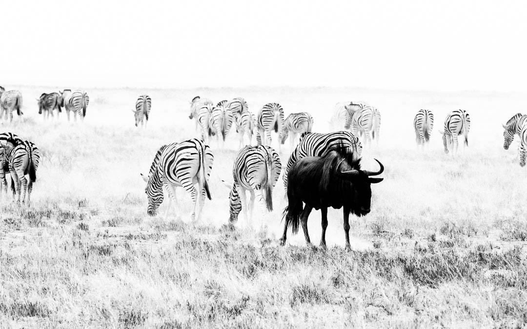 Etosha Animals HeyKey Panorama 05