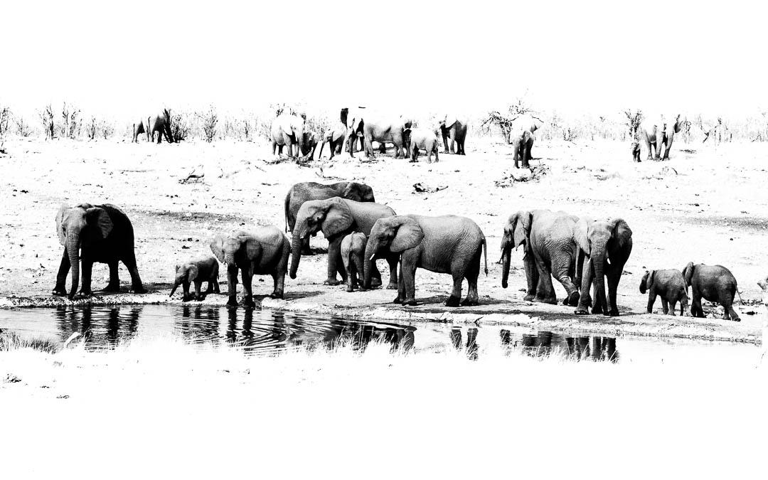 Hey Key Wilderness - Elephants