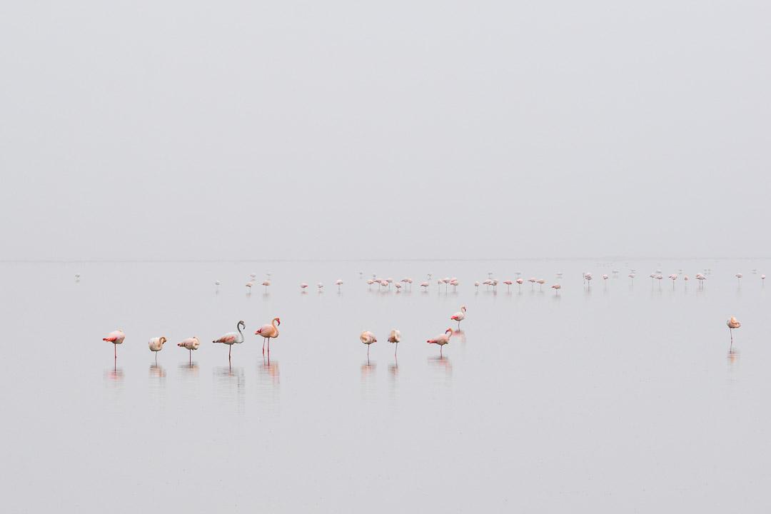 Pink Serenity