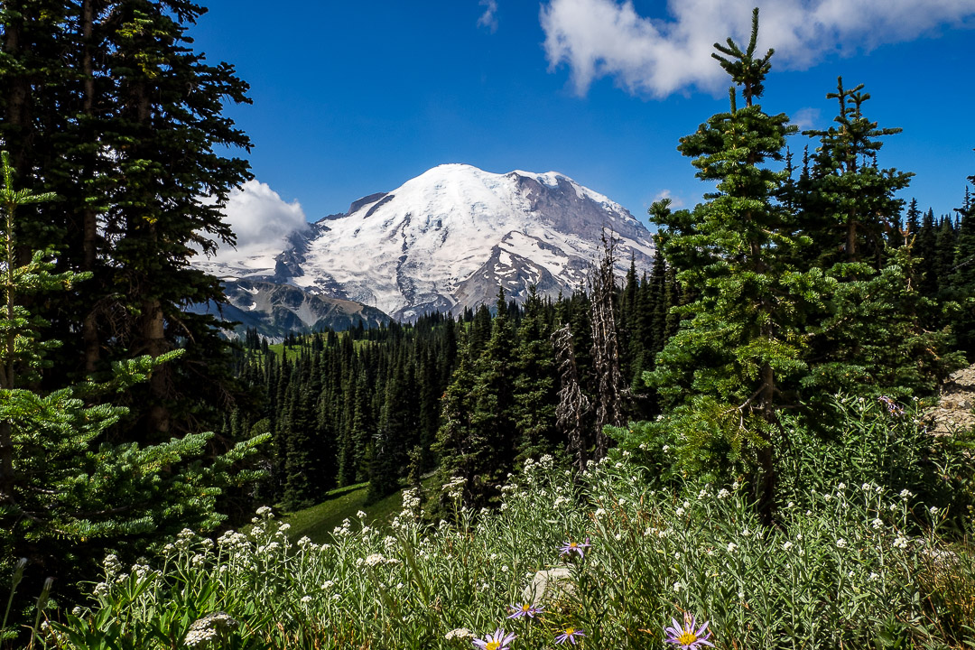 Mt. Rainier | 1/200 sec - f/14 - ISO 200 - 14mm