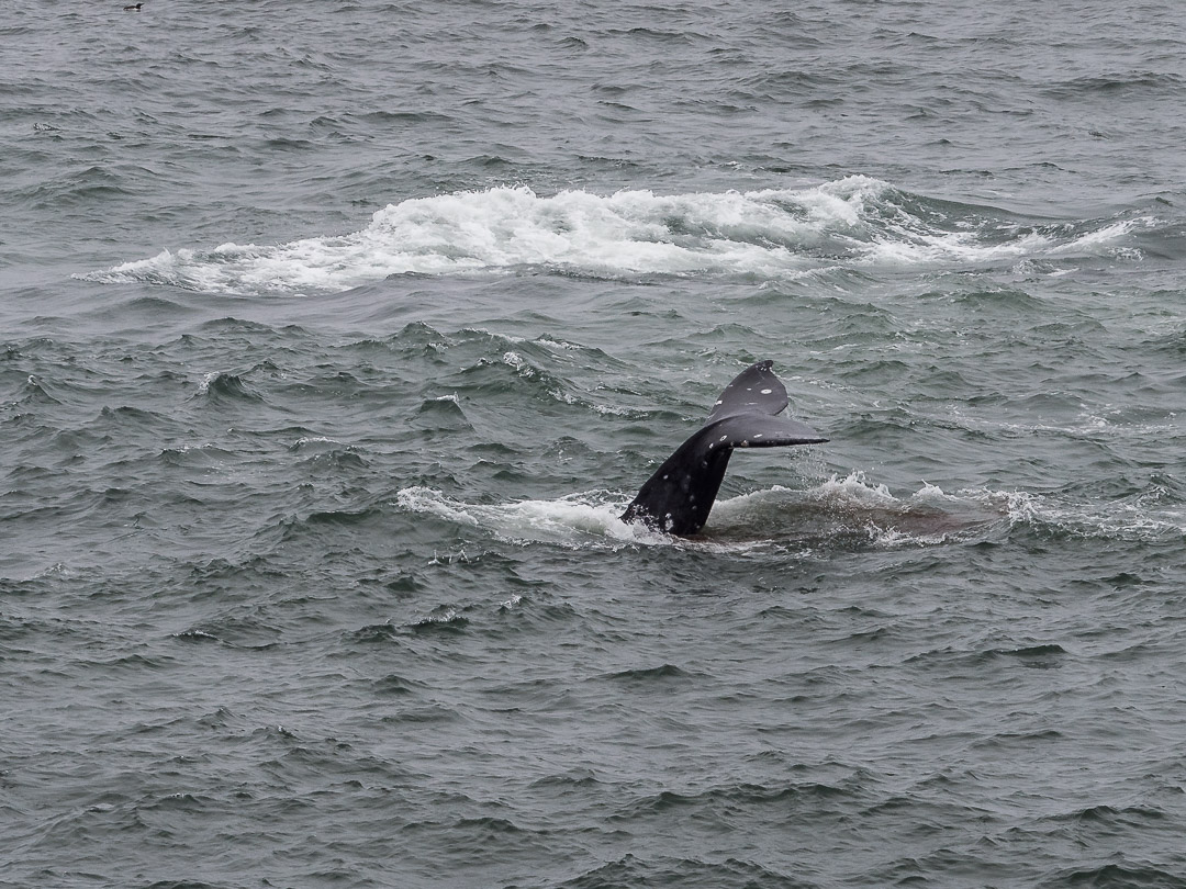 Onshore Whalewatching | 1/250 sec - f/6,3 - ISO 200 - 150mm
