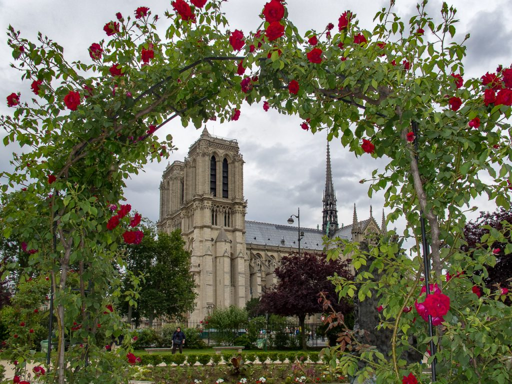 Cathedral Notre Dame de Paris framed by a Rose bush
