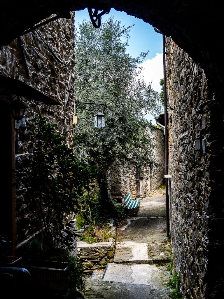 Olive tree in an alley in Montalto Ligure