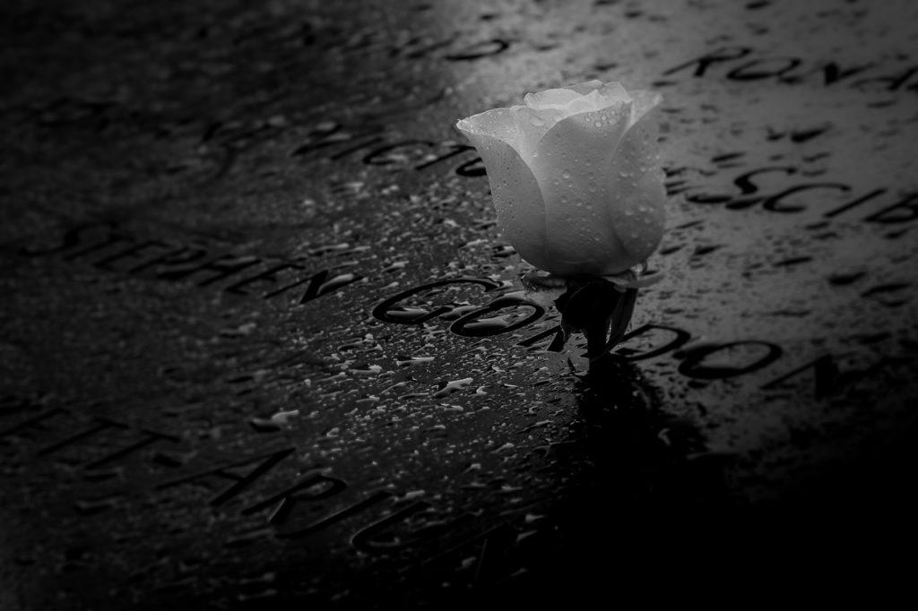 White rose in the 9/11 memorial