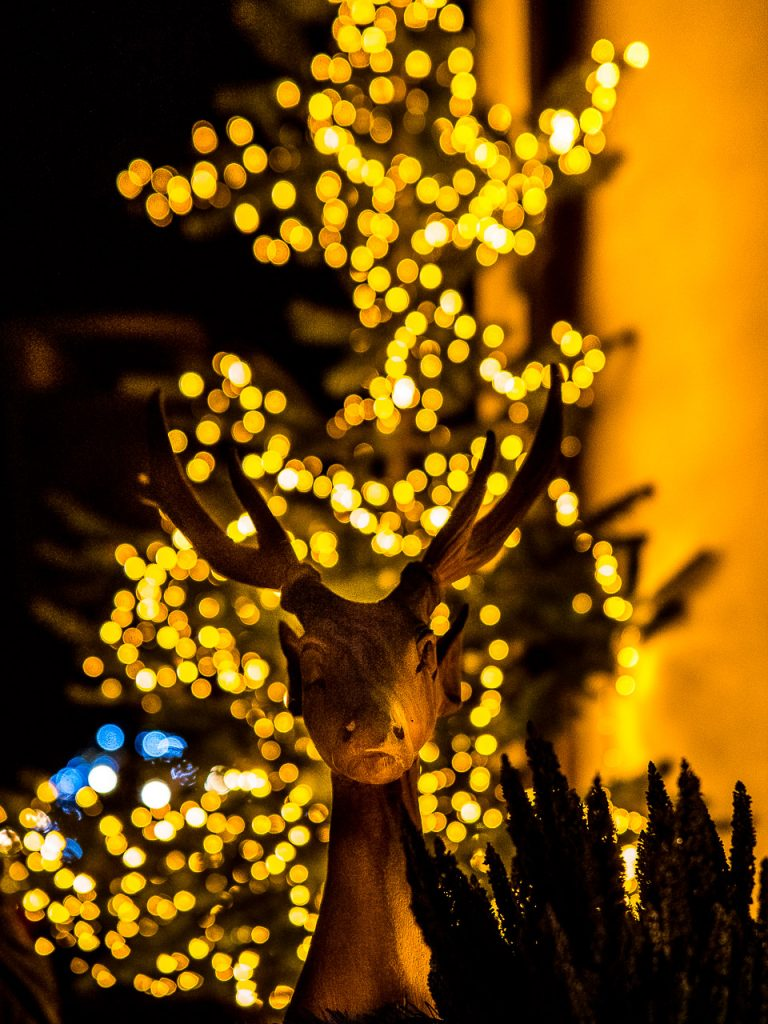 Reindeer in lights