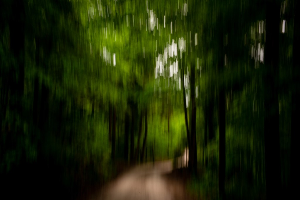 Motion blurred photograph of a path leading out of the woods